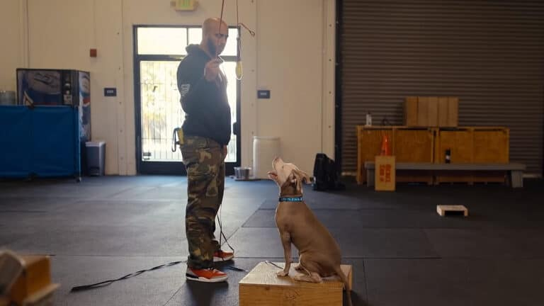 Canine Intervention on Netflix: Dog Training with Jas Leverette